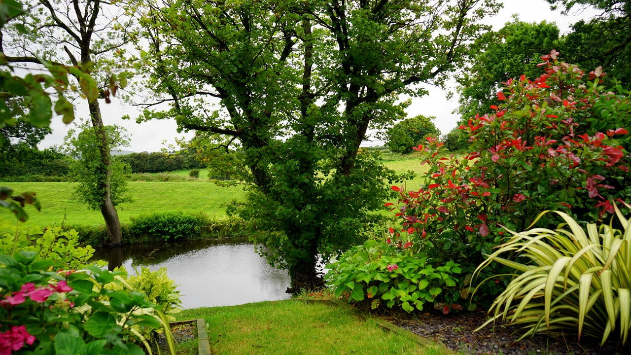 a garden by the pond